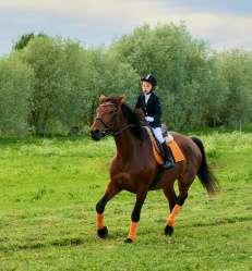 académie équitation