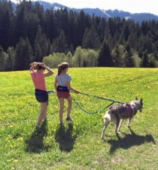 chiens-nordiques-cani-rando.